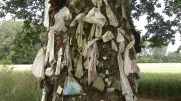 Lieu insolite : l'arbre à clous de Herchies
