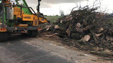 Des sous-traitants spécialisés ont coupé à Incourt pas moins de 42 arbres malades ou pratiquement morts. Des arbres d'alignement que le SPW voulait faire abattre, pour garantir la sécurité des usagers.