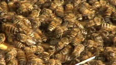 Spa: des abeilles au service du producteur d'eau Spadel