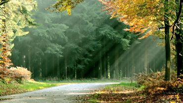 L'approche de l'automne va bientôt révéler la variété des couleurs dans les forêts wallonnes.