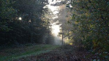 Nos forêts souffrent du réchauffement climatique, de nouvelles essences d'arbres à la rescousse