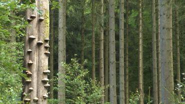 La forêt Saint-Michel de Freyr, une gestion modèle de sa biodiversité