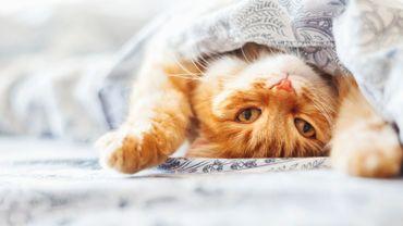 Aménagez votre intérieur pour que votre chat y soit heureux