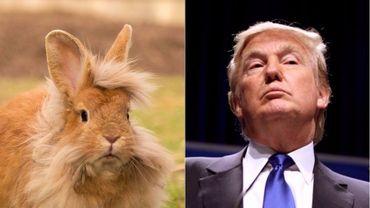 Le mélange entre Donald Trump et un lapin, cela donne Thump