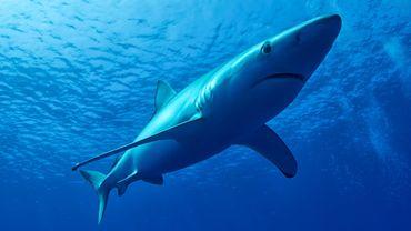 Les poissons et d'autres espèces marines pourraient devoir fuir à des milliers de kilomètres pour échapper aux canicules océaniques.
