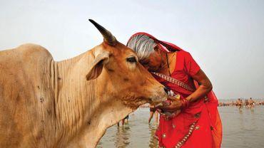 La culture hindouiste et les animaux sacrés