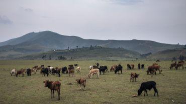 Un éleveur de vaches a été tué par des miliciens le 6 octobre près de Minembwe dans l'est de la République démocratique du Congo