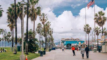 Selon une récente étude, les palmiers de Los Angeles sont désormais la principale source d'émissions de gaz polluants.