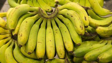 Pologne: on retrouve 160 kilos de cocaïne dans des cageots de bananes importés d'Equateur