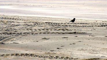 La plage de Zeebrugge aura bientôt une partie non-fumeurs