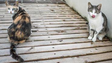l'ASBL Cat Rescue, milite depuis 2011 pour le bien-être des chats abandonnés.