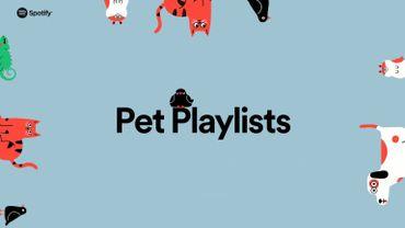 Spotify lance des playlists adaptées à vos animaux de compagnie