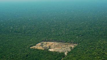 Brésil: la déforestation multipliée par quatre en juillet sur un an.