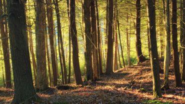 Les zones Natura 2000 enregistrent de meilleurs résultats que les zones non protégées - Illustration