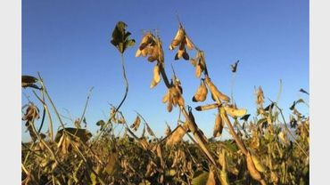 Un champ de soja transgénique près de Santa Fe, en Argentine