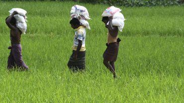 Rohingyas: la Birmanie sous pression à cause à la veille du grand discours de Suu Kyi