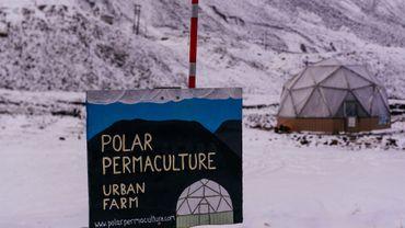 Une petite ferme au beau milieu de l'Arctique, sur l'île norvégienne de Svalbard.