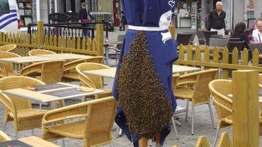 L'essaim d'abeilles sur le parasol