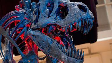 Le T.Rex croquait les os comme de simples boudoirs