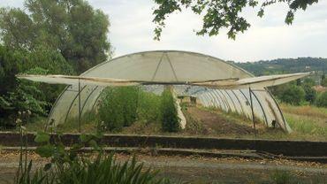 Légende photo : dans le sud de la France, la commune de Mouans Sartoux utilise depuis 2011, une régie municipale agricole produit des légumes bio pour les repas scolaires