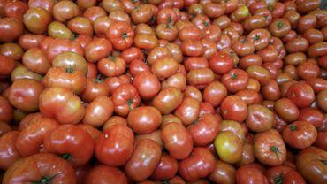 Un stock de tomates