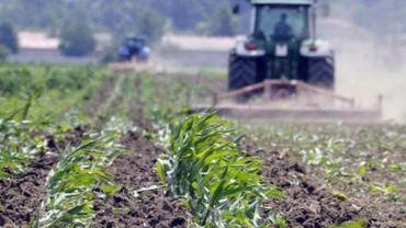 La surface des cultures d'OGM a augmenté de 6 millions d'hectares l'an passé