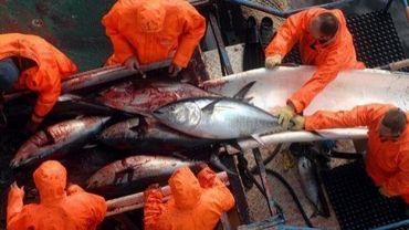 Pêche au thon dans l'Adriatique, le 21 février 2007