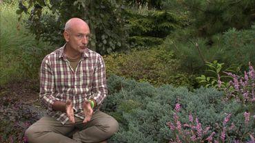 Francis présente le Juniperus squamata 'Blue Star'