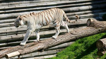 Le temple des tigres blancs de Pairi Daiza a été primé