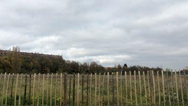Bruxelles: Après le sauvetage du Marais du Wiels, celui de la Friche Josaphat?