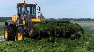 Un tracteur retire les algues vertes dans une plage de Saint-Michel-en-Grève, dans l'ouest de la France, le 2 mai 2017