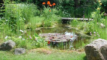 Comment cr er une mare naturelle dans son jardin - Faire une mare dans son jardin ...