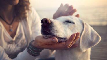 Ce que votre chien vous communique