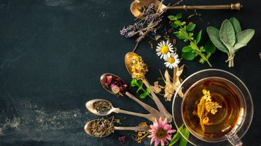 Quelles plantes pour une digestion optimale ?