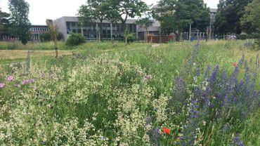 L'UMons a déjà créé son jardin punk autour de son campus.