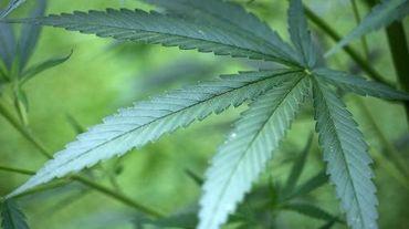 Un projet de loi visant à dépénaliser la culture de cannabis à usage personnel ou à des fins thérapeutiques au Chili franchit une étape importante avec son approbation par la commission de la santé de la Chambre des députés