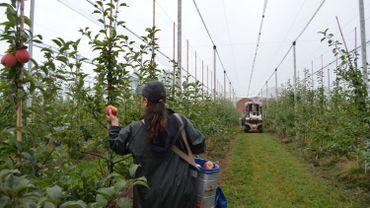 Aux Vergers de Barry, on s'attend à une demi-récolte en pommes et à 25% de rendement en moins en poires.