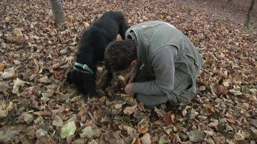 Italie : les chiens à l'université pour devenir truffier