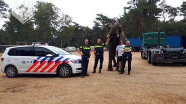 """Appel étonnant aux Pays-Bas: """"Allo, police? J'ai un éléphant dans mon jardin!"""" - © Photo Facebook de la police d'Ommen"""