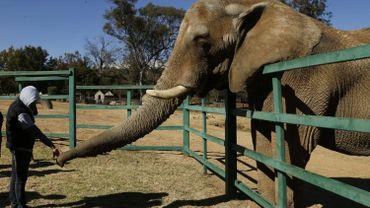 Lammie vit seule au zoo de Johannesburg depuis la mort de son compargnon, en octobre