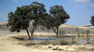 Certaines surfaces forestières dans les zones sèches n'étaient pas visibles sur les images satellites utilisées par les scientifiques pour calculer l'étendue des zones forestières mondiales.