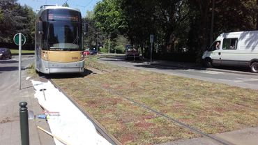 Les plantes sont testées sur les voies du tram 82 à Molenbeek