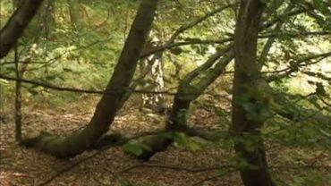 Forêt de Soignes : comment le poumon vert de Bruxelles est particulièrement protégé