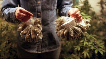 """Plants de Cannabis issus d'une production """"domestique"""""""