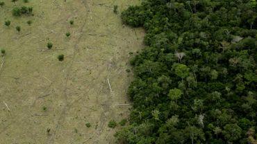 L'équivalent d'un terrain de foot de forêt primaire détruit toutes les six secondes, selon une étude