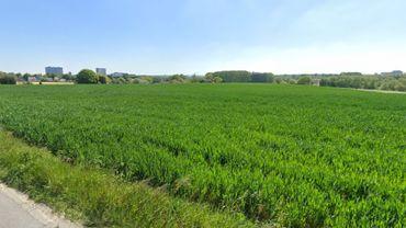Des exploitations agricoles en région bruxelloise, on en retrouve notamment à Neerpede, à Anderlecht.