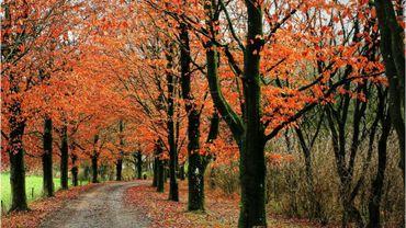 Forêt de Wellin: on surveille les chênes de près