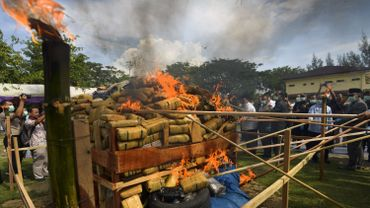Indonésie: la police brûle une pile de 800kg de marijuana