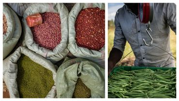 Grains et haricots sur des marchés africains (images d'illustration)