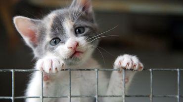 Un chat a été contaminé par sa maîtresse mais le contraire n'est pas possible, rassure l'Université de Liège.